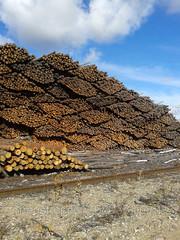 Предлагает к продаже лес - кругляк из России регионов Сибири, ,